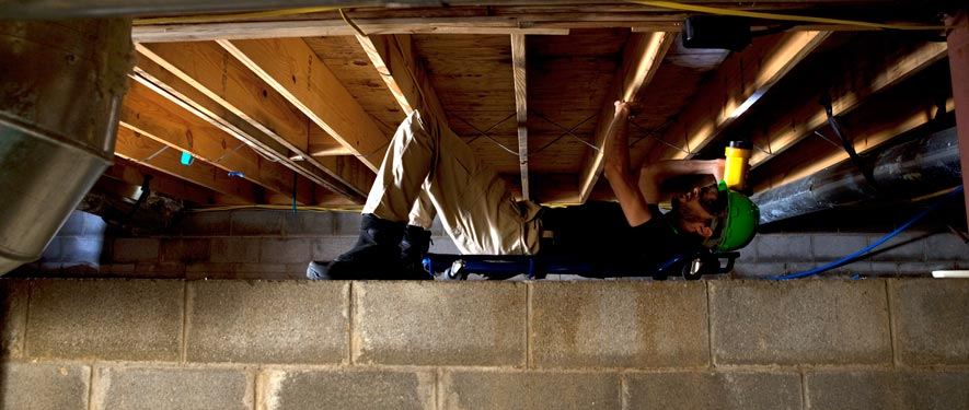 Beaufort, SC mold removal